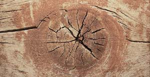 The basic defects and their account in various kinds of wood products